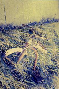 abandoned trycycle in long grass