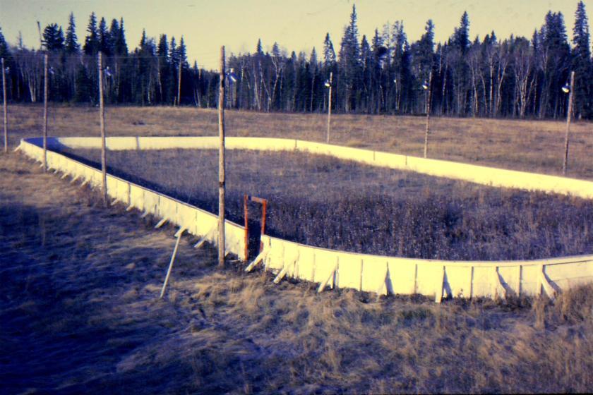 abandoned hockey rink