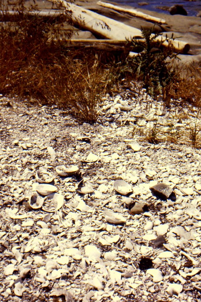 clam shell midden or waste dump