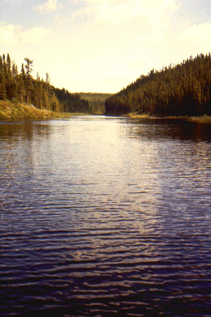 mouth of pickerel fish spawning stream logged to reduce the ecological damage of hydro dam flooding